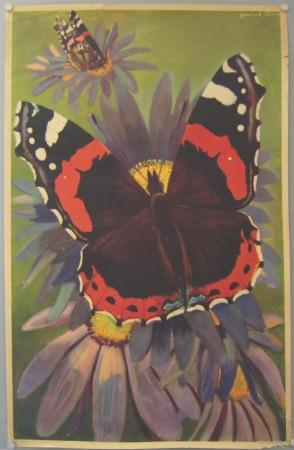 Derrick Sayer posters Butterflies