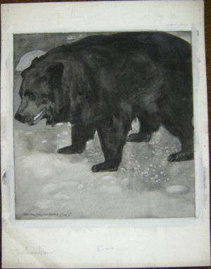 Carton Moore Park drawing Bear