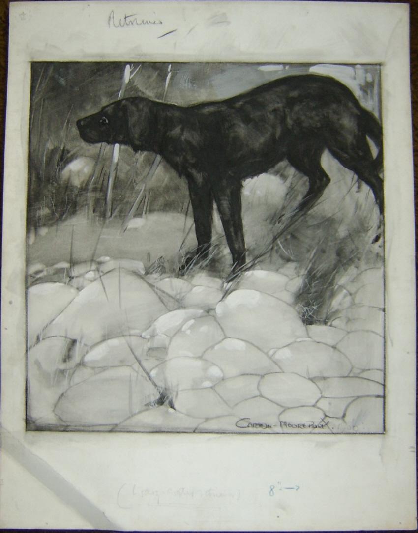 Carton Moore Park drawing Dog