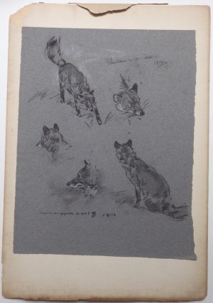 Carton Moore Park drawing Foxes