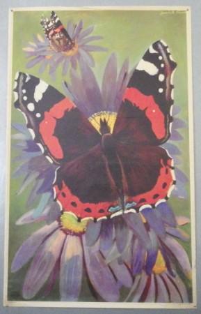 Derrick Sayer poster Butterflies