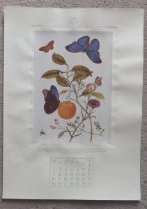 Noel Hopking print2